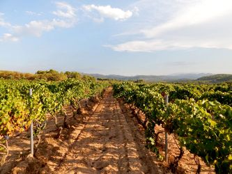 Our Montsant DO vineyards in Priorat region