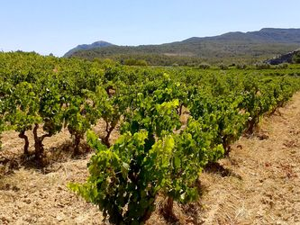 Our vineyards in Priorat region